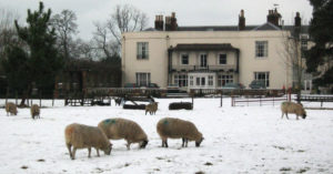 Sheep in the snow at Pilgrims Hall